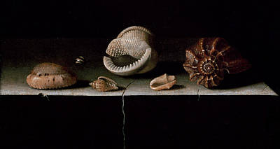 Six Shells On A Stone Shelf Poster by Adrian Coorte
