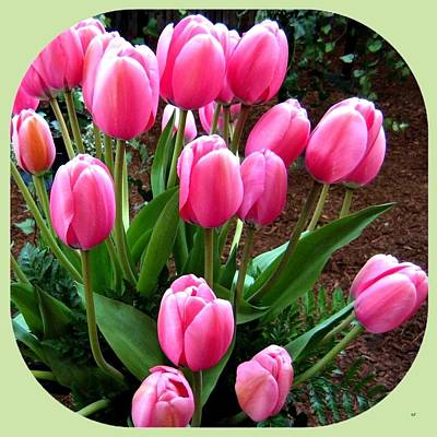Skagit Valley Tulips 9 Poster by Will Borden