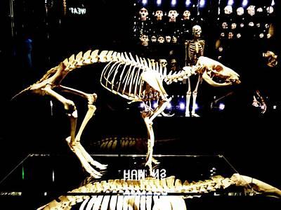 Skeleton 340 Poster