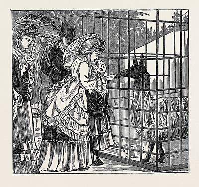 Sketches In The International Exhibition The Llama 1871 Poster by English School