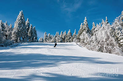 Skiers Paradise Poster by Sharon Seaward