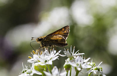 Skipper On A Late Summer Day Poster