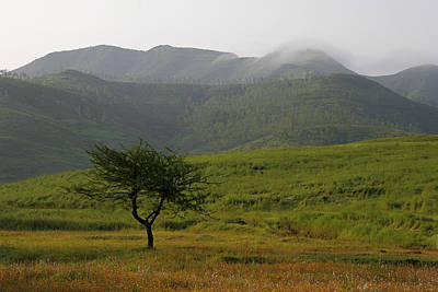 Poster featuring the photograph Skc 0053 A Solitary Tree by Sunil Kapadia