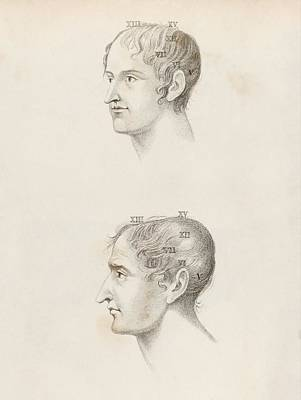 Skull Comparisons In Phrenology Poster