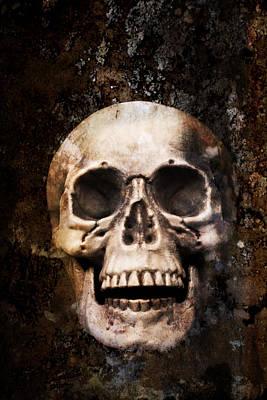Skull In Earth Poster by Amanda Elwell