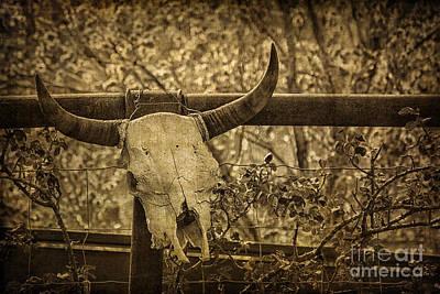 Skull In Sepia Poster by Priscilla Burgers