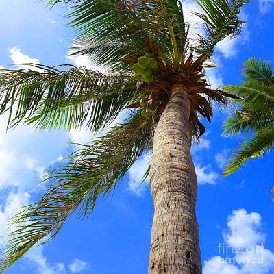 Sky And The Coconut Tree Poster