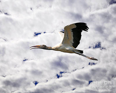 Sky Stork Poster by Al Powell Photography USA