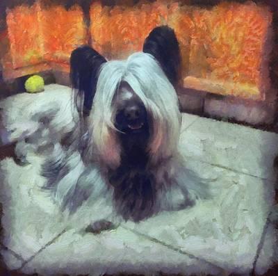 Skye Terrier Poster by Janice MacLellan
