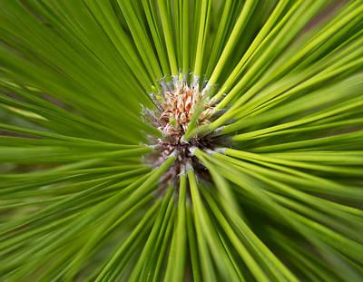 Slash Pine Needles 2 Poster
