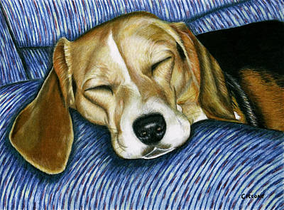 Sleeping Beagle Poster
