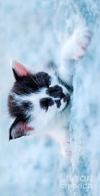 Sleeping Black And White Kitten On Blue Plush Bed Iphone Case Poster