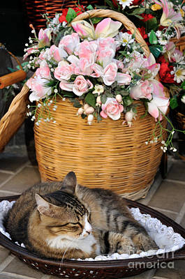 Sleeping Cat At Flower Shop Poster