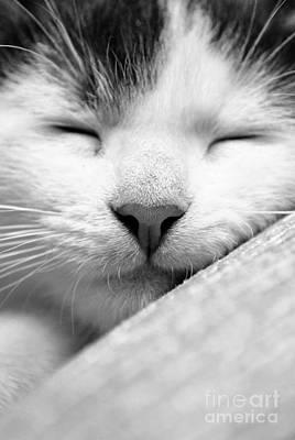 Sleeping Kitten Poster by Martin Capek