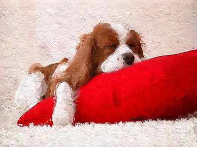 Sleeping Puppy On Red Pillow Poster
