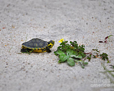 Slider And Sorrel In Sand Poster by Al Powell Photography USA