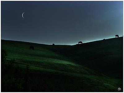 Sliver Of Light On The Pasture Poster by Wayne King