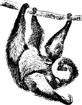 Sloth Drawing Poster