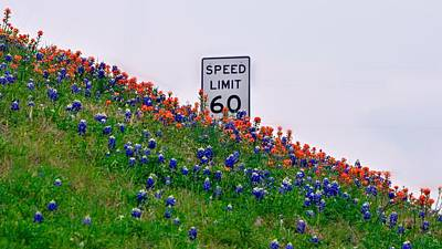 Slow Down And Smell The Bluebonnets Poster