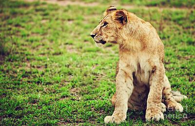 Small Lion Cub Portrait. Tanzania Poster