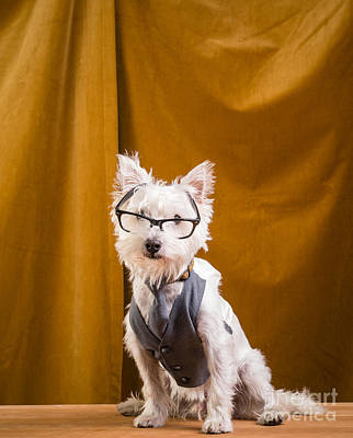 Small White Dog Wearing Glasses And Vest Poster