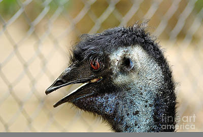 Smiley Face Emu Poster by Kaye Menner