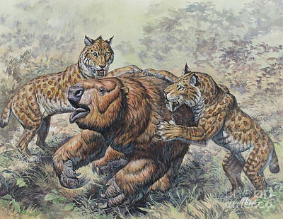 Smilodon Dirk-toothed Cats Attacking Poster by Mark Hallett