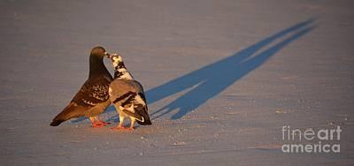 Smooching Love Birds Poster