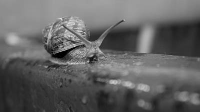 Poster featuring the photograph Snail by Lora Lee Chapman