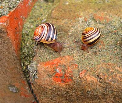 Poster featuring the photograph Snail Snail The Gangs All Here by Mary Bedy
