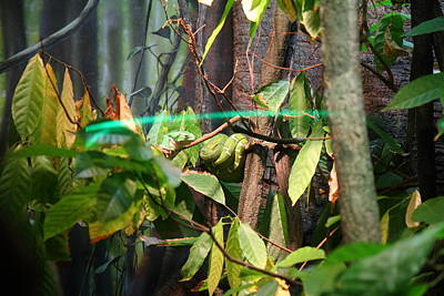 Snake - National Aquarium In Baltimore Md - 12121 Poster by DC Photographer