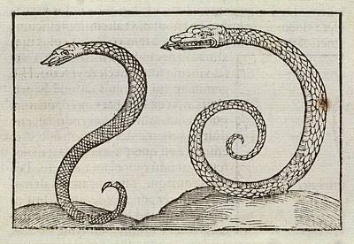 Snakes Poster by Middle Temple Library