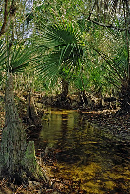 Snell Creek. Osceola County Florida Poster by Chris  Kusik