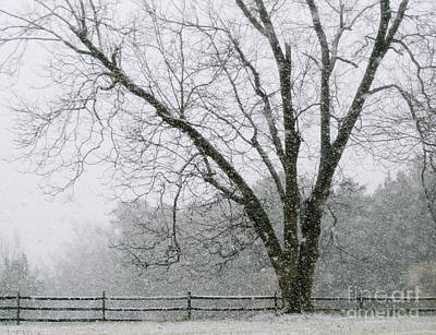 Snow And Pecan Tree Poster