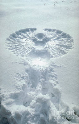 Snow Angel Poster by Bill Longcore