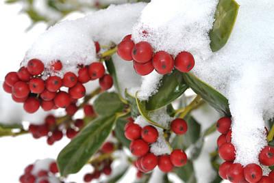 Snow Berries Poster
