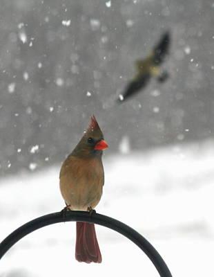 Snow Bird II Poster