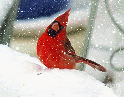 Snow Cardinal Poster by Yumi Johnson