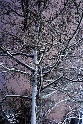Snow Coat Poster