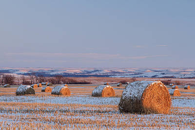 Snow Covered Bales Poster by Scott Bean