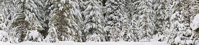 Snow Covered Pine Trees, Deschutes Poster by Panoramic Images