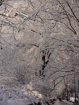 Snow Covered Trees On Central Park West Poster by Winifred Butler