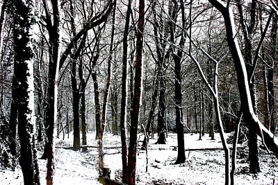 Snow Covered Woodland Poster by Martin Newman