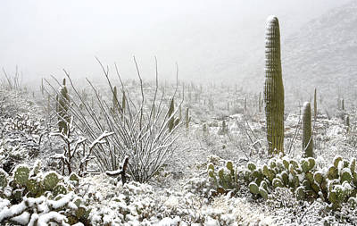 Snow Day In The Desert  Poster by Saija  Lehtonen