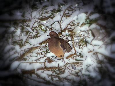 Snow Dove Poster