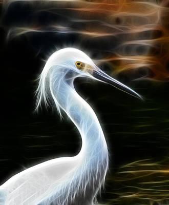Snow Egret Poster