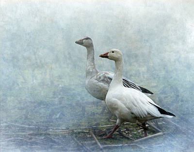 Snow Geese Poster by Angie Vogel