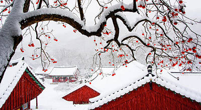 Snow In Temple Poster