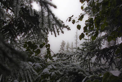 Snow In Trees At Narada Falls Poster