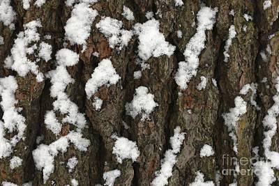 Snow On Pine Bark Poster